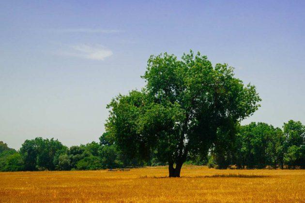 IEA integrated environmental authorisation